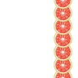 导航葡萄柚切片无缝的装饰垂直的边界  免版税图库摄影