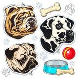 导航象色的狗、牛头犬、哈巴狗、达尔马提亚狗和一个碗骨头 向量例证