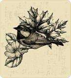 导航鸟北美山雀的例证,叶子。 免版税库存照片