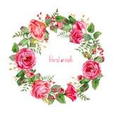 导航围绕水彩玫瑰和莓果框架  免版税库存照片