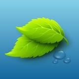 导航绿色叶子和露滴的例证 库存图片