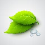 导航绿色叶子和露滴的例证 免版税库存照片