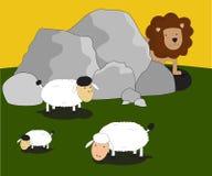 导航hidding在岩石后的动物狮子看绵羊羊羔 库存照片
