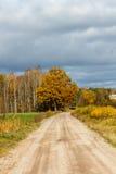 导致一棵橙黄树的路 免版税库存照片