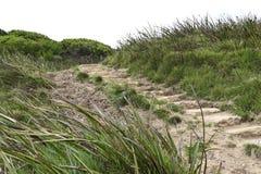 导致伟大的海洋的步在维多利亚澳大利亚走 库存照片