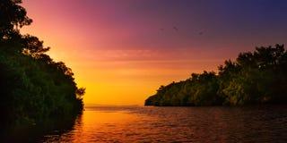 导致公海特立尼达和多巴哥五颜六色的日落的美洲红树蓝色河 免版税库存图片