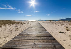 导致在沙丘的海滩的木走道 免版税库存图片
