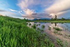 导致山和沼泽的草 免版税库存照片