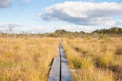 导致无限的领域的平静的农村木板走道 免版税库存照片