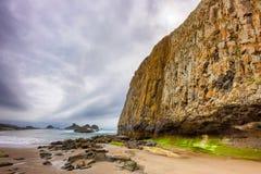 封印在俄勒冈海岸的岩石海滩 免版税库存图片