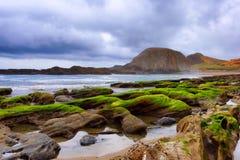 封印在俄勒冈海岸的岩石海滩 免版税库存照片