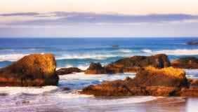 封印岩石海滩 库存照片