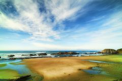 封印岩石海滩 免版税库存照片