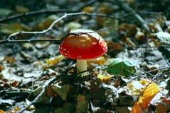 射击一个小组在森林地板上的蘑菇 免版税库存照片