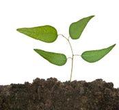 射击土壤结构树 库存图片