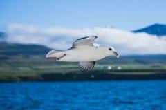 射击在蓝天的一只飞行海鸥 免版税库存照片