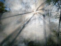 射击森林烟 免版税库存照片