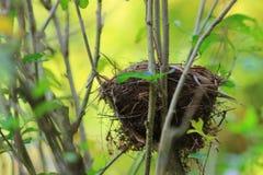 射击空的鸟巢在室外 免版税库存图片