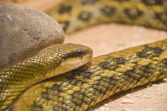 射击蛇玻璃容器 库存照片