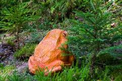 射箭的目标青蛙 免版税库存照片