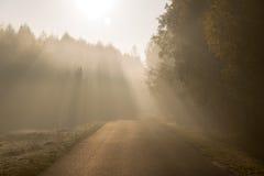 射线太阳轻虽则来在空的路的树 图库摄影