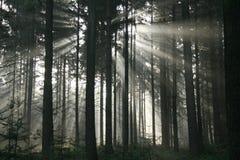 射线星期日森林 免版税库存图片