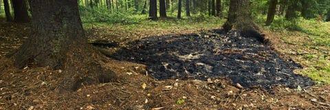 射击森林 免版税库存照片