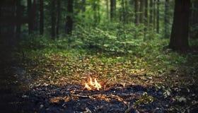 射击森林 免版税库存图片