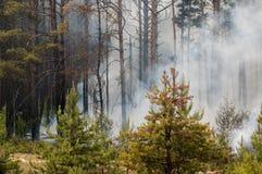 射击森林 库存图片