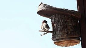 射击鸟在树上小屋里 影视素材