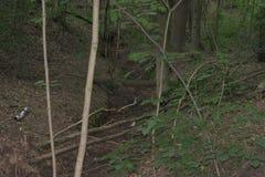 小下落的树和一本更大的日志跨接的干燥小湾河床 库存图片