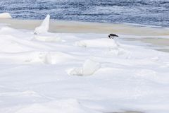 小丘和浮冰在冬天河 库存图片