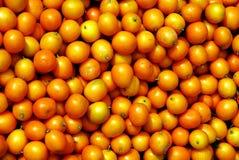小中国的cumquat 库存照片