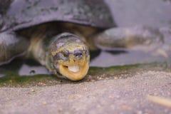 小乌龟看照相机 库存照片