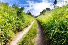 小乡下公路通过茂盛植物 免版税库存图片