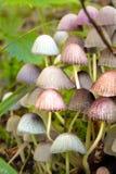 小五颜六色的桃红色蘑菇特写镜头  免版税库存图片