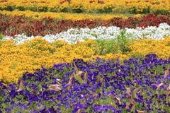 小五颜六色的花背景 免版税库存照片