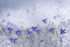 小会开蓝色钟形花的草框架在织地不很细灰色桌上的 免版税库存图片