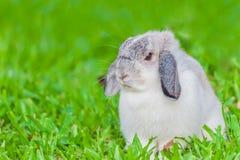 小兔在庭院里 图库摄影