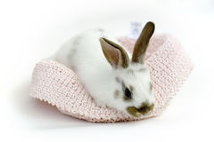 小兔子甜点 免版税库存图片