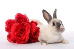 小兔玫瑰 免版税图库摄影