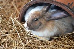 小兔画象 库存照片