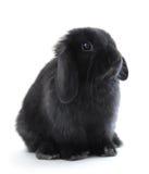 小兔 免版税库存照片