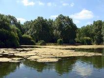 小公园的池塘 免版税库存照片