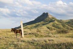 小公马离开牧群 免版税库存照片