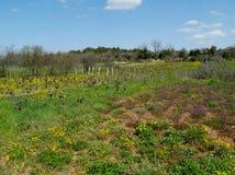 小农业在克罗地亚 免版税库存图片
