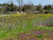 小农业在克罗地亚 图库摄影