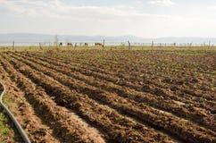 小农厂灌溉 库存图片