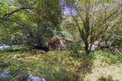 小农村房子在有用常春藤和ne盖的树的一个森林里 免版税库存图片
