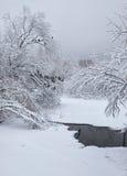 小冬天小河在雪下的被雪包围住的树下在冬天 库存图片